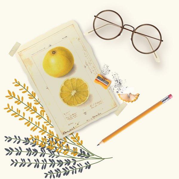 détox jus de citron